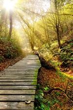 미리보기 iPhone 배경 화면 공원, 가을, 경로, 나무, 태양 광선