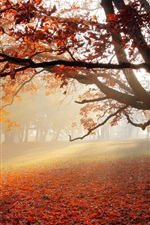 Preview iPhone wallpaper Park in autumn, tree, red leaves, morning, fog