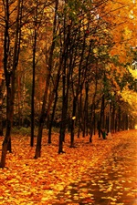 Preview iPhone wallpaper Park in autumn, trees, yellow leaves, footpath, lights, bench