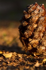 Preview iPhone wallpaper Pine cones on the ground