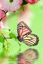 Preview iPhone wallpaper Pink flowers blossom, spring, butterfly, water reflection