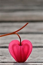 Preview iPhone wallpaper Pink lantern flower, wood board