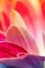 Preview iPhone wallpaper Pink petals flower macro photography