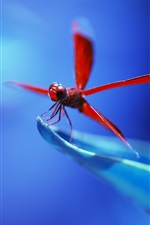 Preview iPhone wallpaper Red dragonfly, blue background