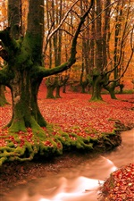 Preview iPhone wallpaper Red leaves ground, creek, forest, trees, autumn landscape