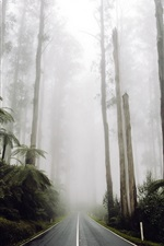 Preview iPhone wallpaper Road in the forest, trees, fog