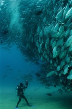 Sardines, fish underwater, diver, Cabo Pulmo National Park, Mexico
