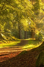 Preview iPhone wallpaper Scotland Aberdeen, trees, path, sunshine