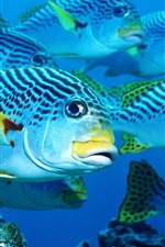 Preview iPhone wallpaper Sea fish, underwater