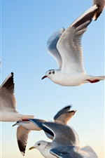 Preview iPhone wallpaper Seagulls flying