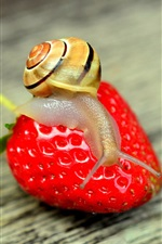 Preview iPhone wallpaper Snail and big strawberry