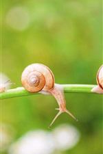 Snail, insect, grass, bokeh