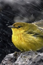 Sparrow in rain