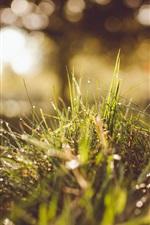 Preview iPhone wallpaper Summer grass after rain, water drops, sunshine