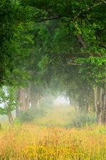 Preview iPhone wallpaper Summer nature scenery, trees, grass, fog, dawn