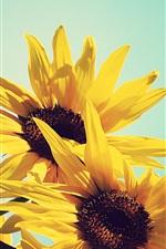 iPhone壁紙のプレビュー ひまわり、黄色の花びら、青空