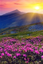 Preview iPhone wallpaper Sunrise, mountains, flowers, grass, dawn