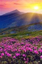 iPhone fondos de pantalla Salida del sol, montañas, flores, hierba, amanecer