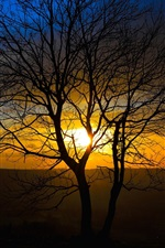 Preview iPhone wallpaper Sunset nature scenery, trees, sun rays, evening