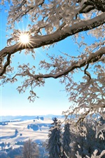 Preview iPhone wallpaper Switzerland, winter nature, thick snow, trees, sun rays
