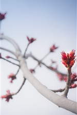 Preview iPhone wallpaper Tree branch, stem, buds, sky