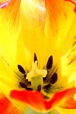 미리보기 iPhone 배경 화면 튤립 꽃 매크로 사진, 오렌지 꽃잎, 암술