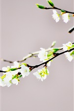 Preview iPhone wallpaper White flowers close-up, twigs, bokeh, spring