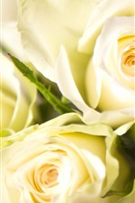 Preview iPhone wallpaper White rose macro photography, buds, petals