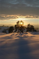 Preview iPhone wallpaper Winter morning, sunrise, snow, trees, shadow