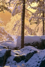 Preview iPhone wallpaper Winter, thick snow, forest, trees, sunshine