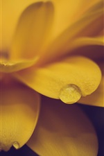 Preview iPhone wallpaper Yellow flower close-up, petals, dew