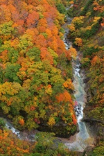 Preview iPhone wallpaper Above to view the forest, gorge, river, trees, autumn