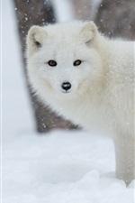 Preview iPhone wallpaper Arctic fox in snow winter