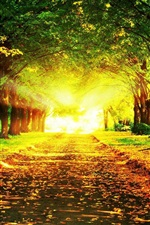 Preview iPhone wallpaper Autumn beautiful landscape, road, trees, grass, sun rays