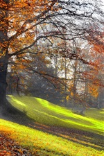 Preview iPhone wallpaper Autumn morning, trees, yellow leaves, grass, sun rays