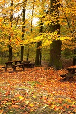Preview iPhone wallpaper Autumn park, forest, trees, red leaves, benches