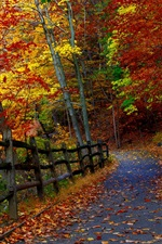 Autumn park, trees, fence, road, falling leaves