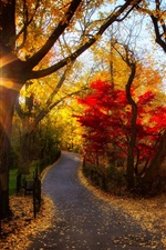 Preview iPhone wallpaper Autumn park, trees, yellow leaves, sunlight, morning