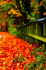 Preview iPhone wallpaper Autumn red leaves on ground, fence, trees, blur background