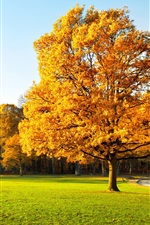 미리보기 iPhone 배경 화면 가을, 나무, 공원, 잔디, 경로