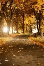 미리보기 iPhone 배경 화면 가을, 나무, 도로, 노란색 단풍, 태양 광선