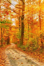 Preview iPhone wallpaper Beautiful autumn forest, trees, path, sun rays