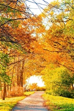 Preview iPhone wallpaper Beautiful autumn park, trees, path, yellow leaves