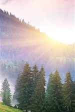 Preview iPhone wallpaper Beautiful morning nature, mountains, fog, dawn, trees, sun rays