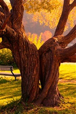 Preview iPhone wallpaper Big tree in autumn park, bench, grass