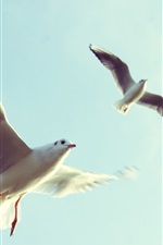 Preview iPhone wallpaper Birds flight, wings, seagulls, sky