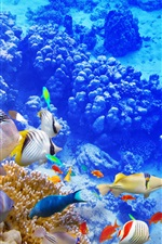 Preview iPhone wallpaper Blue sea underwater world, coral, tropical fishes