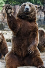 Preview iPhone wallpaper Brown bears in zoo