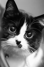 Preview iPhone wallpaper Cute kitten, white black