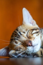 Cute kitty sleeping, mustache